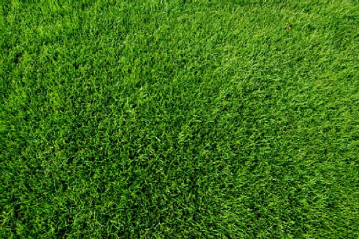 What type of turf should you select?