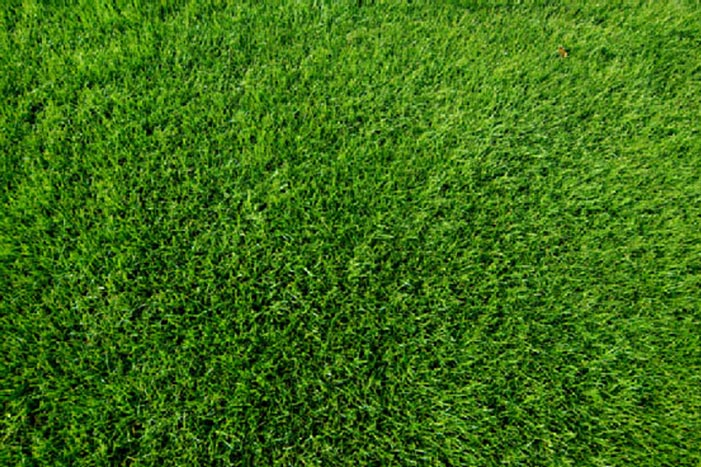 Consistent quality fresh turf guaranteed weed free