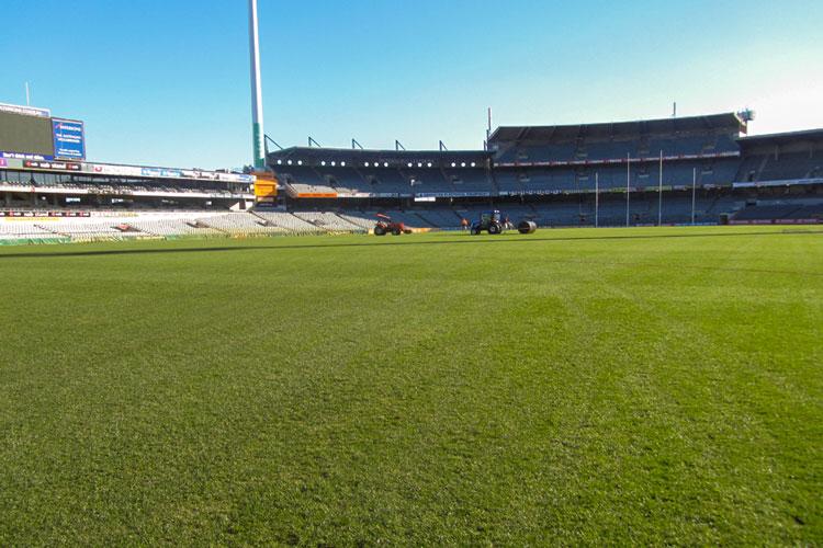 Stadium Blend lawn installation at Domain Stadium Perth