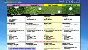 Greenacres turf comparison chart