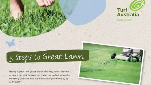 3 steps to great lawn