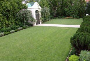 Empire Zoysia lawn