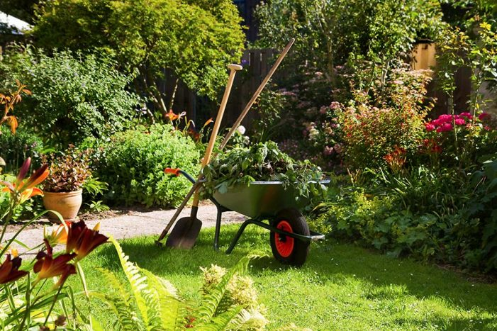 Smart ways to create a garden on a budget