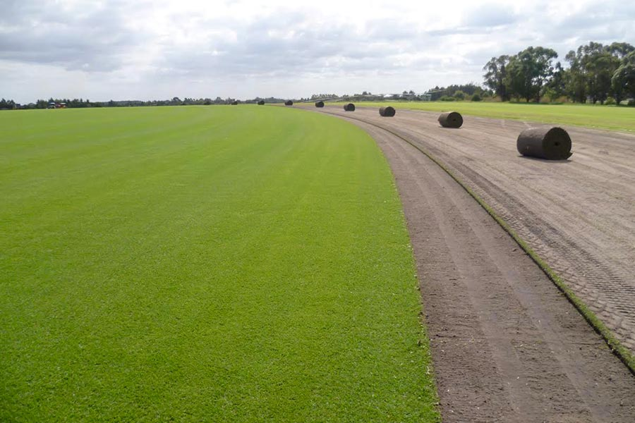 Best variety & greatest availability as Greenacres is WA's largest turf farm