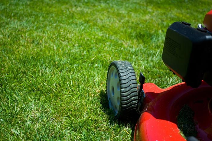 What steps can I take to have a healthy looking lawn year round?