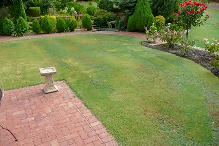Tips for lawn care in spring