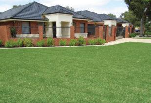 Palmetto lawn