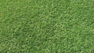 The benefits of Village Green premium Kikuyu